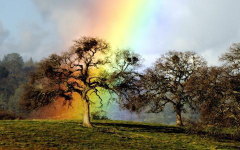 彩虹山顶树壁纸