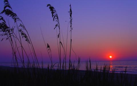 海滩上的紫色日落壁纸