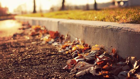 道路壁纸上的叶子