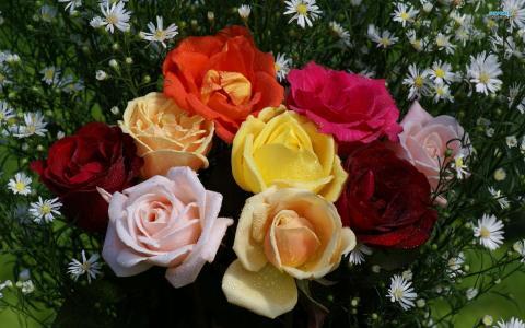 多彩玫瑰壁纸