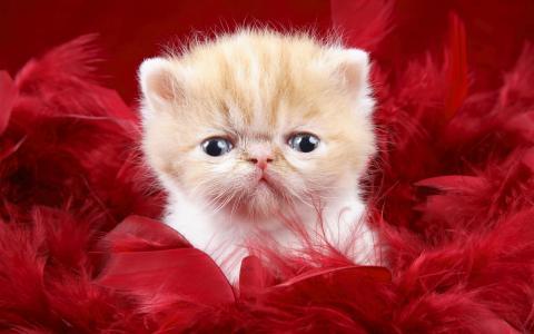 可爱的小猫作为爱情礼物壁纸