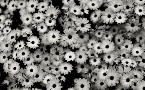 黑白花壁纸