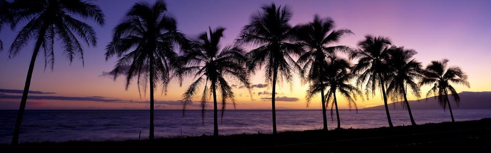 美丽的夕阳,剪影,棕榈树,毛伊岛,夏威夷,美国壁纸