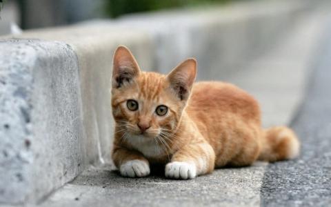 可爱的小猫躺在路边壁纸