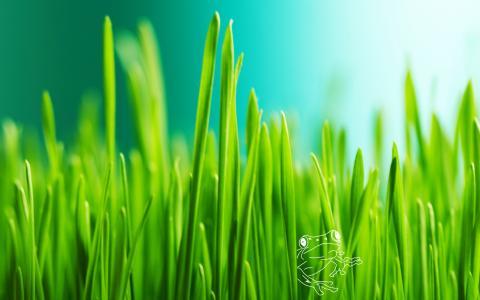 草自然免费下载壁纸