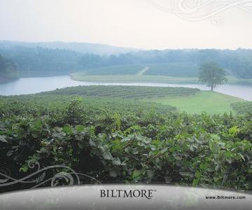 比特摩尔庄园的葡萄园壁纸
