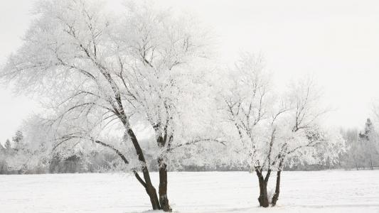 白色冬日壁纸