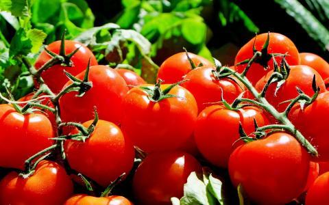 红色番茄壁纸