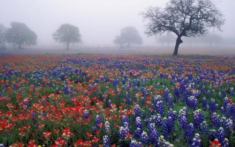 野花壁纸的有雾领域