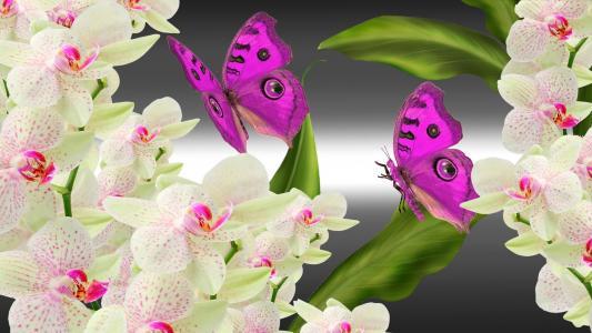 兰花蝴蝶明亮的壁纸
