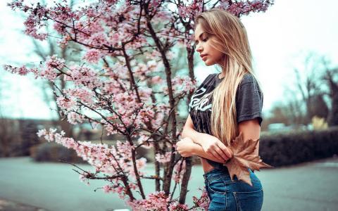 金发女郎和樱花壁纸
