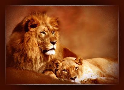 狮子座狮子壁纸