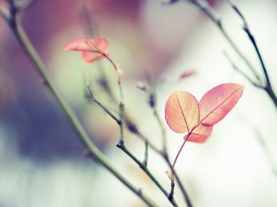 红叶,树枝,软焦点壁纸