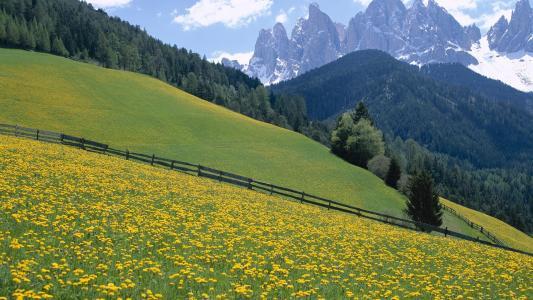 野花,白云岩山脉,意大利。wallpaper