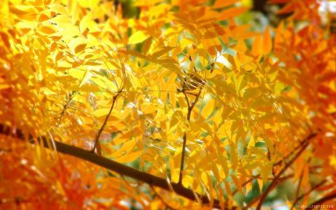 秋天的叶子壁纸