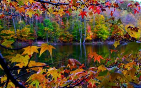 秋叶湖壁纸