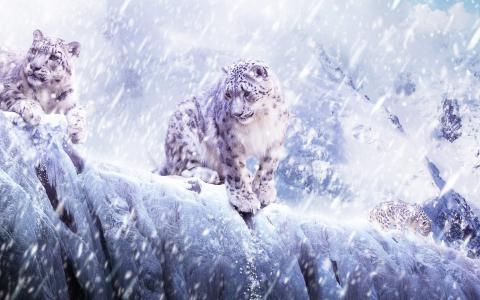 雪豹壁纸壁纸