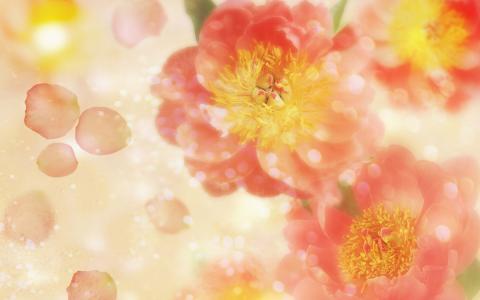 粉红牡丹花壁纸