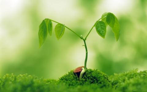 大植物树高分辨率图片壁纸