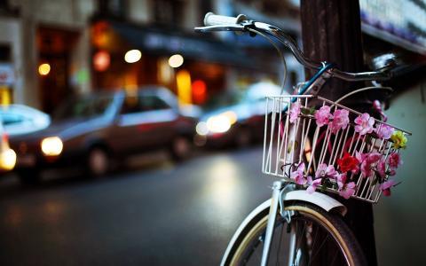 自行车,鲜花,晚上,城市壁纸