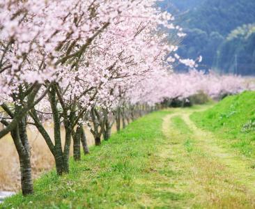 大自然的可爱的路径壁纸