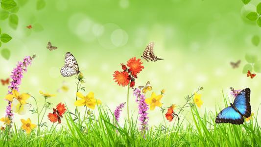 春,花,草,蝴蝶,绿色背景,创意设计壁纸