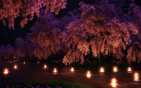 樱花开花粉红色的夜晚灯CG高清壁纸