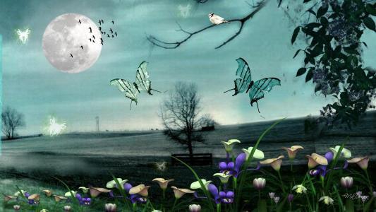 夜晚的蝴蝶壁纸