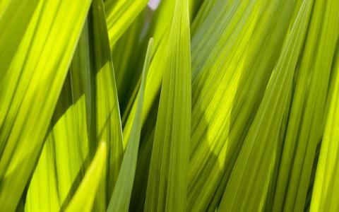 绿叶贴壁纸