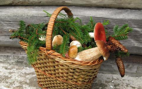 蘑菇篮子壁纸