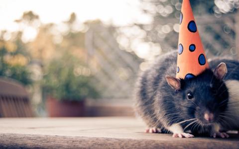 帽子壁纸鼠标
