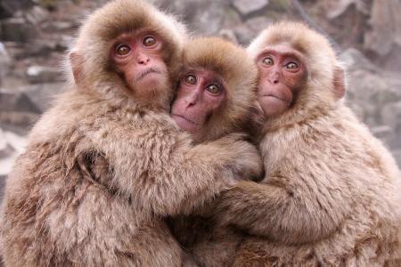 ***三只可爱的猴子壁纸