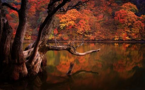 湖,森林,秋天,韩国,悲伤,大自然壁纸