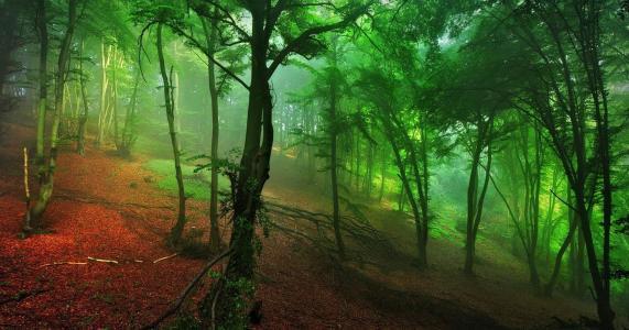 森林,绿色,雾,小山,早晨,自然壁纸