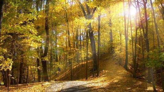 阳光明媚的秋日在森林壁纸