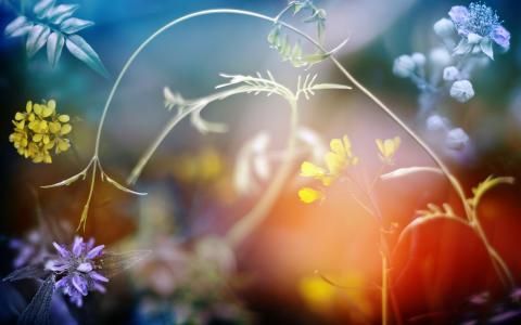 野花,植物,背景虚化的壁纸