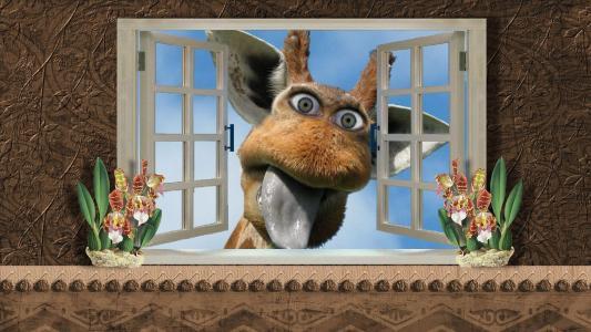 在我的窗口里有一只长颈鹿!
