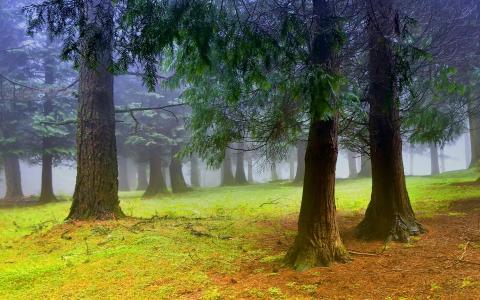 森林中的早晨壁纸