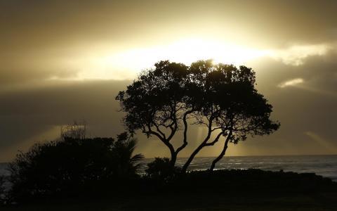 树剪影海洋阳光高清壁纸