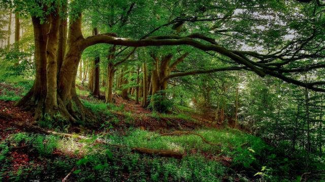 绿色丛林森林风景壁纸