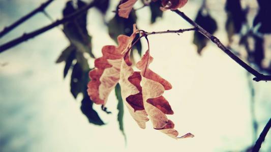 靠近秋天叶子高清壁纸