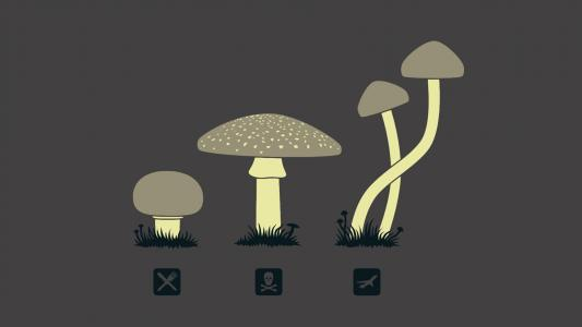 蘑菇高清壁纸