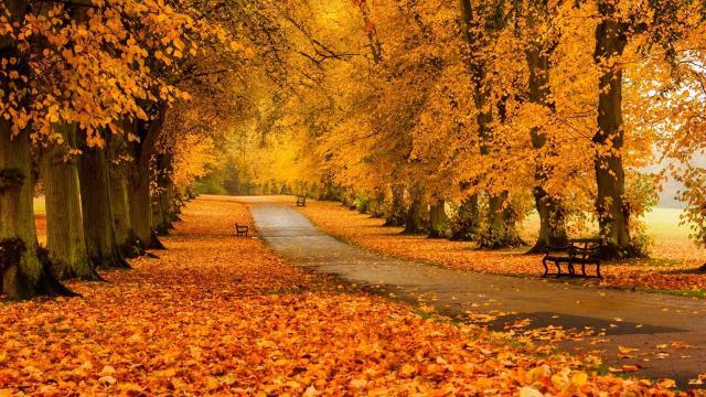 秋天的落叶风景壁纸