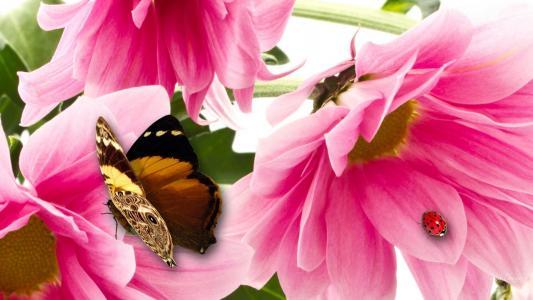 蝴蝶飞舞壁纸