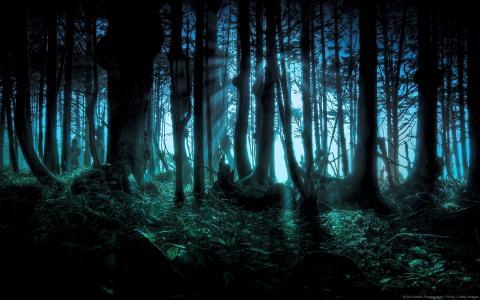 森林,隐藏,晚上壁纸