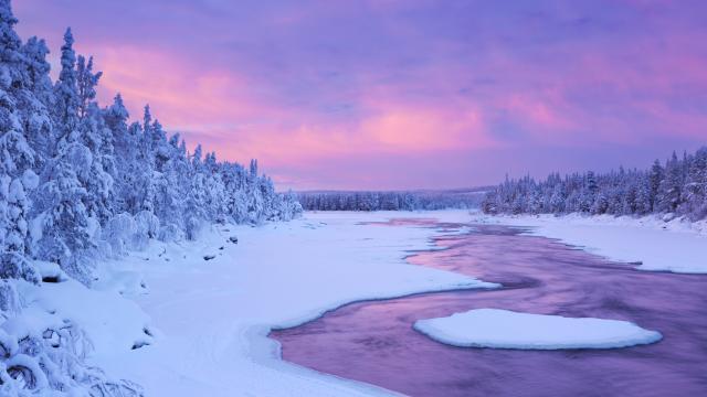 森林雪地雪景图片壁纸