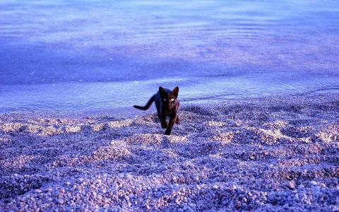 可爱的黑色小猫在海滩壁纸