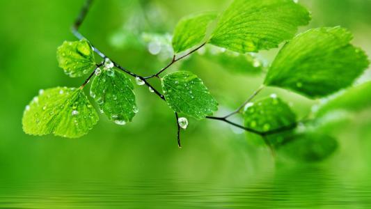 绿色,自然,叶子,水滴,滴壁纸