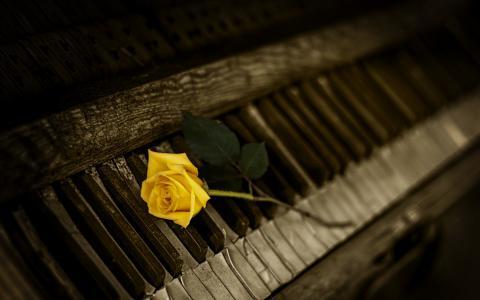 钢琴与玫瑰壁纸