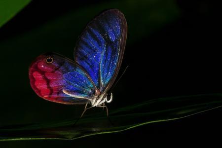 晚上,翅膀,蝴蝶